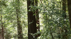 New growth redwood forest from historic Skunk train California HD 6061 Stock Footage