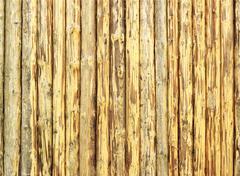 peeled logs - stock photo