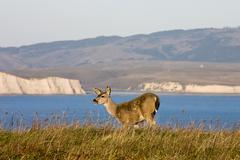 point reyes national seashore wildlife. - stock photo