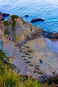 Point reyes national seashore wildlife. Stock Photos