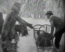 World War 1 - Dog sled medical transport Stock Footage