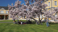 Stock Video Footage of Picnic under the Magnolia Tree of Gera