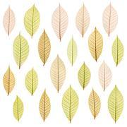 transparent leaf - stock photo