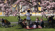 Stock Video Footage of Picnic under a Magnolia Tree