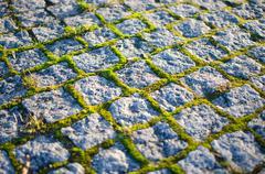 Mossy cobblestones Stock Photos