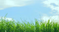 Grass HD Footage