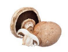 Portabella mushrooms. Stock Photos