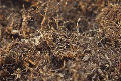 Stock Photo of closeup dried tobacco