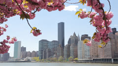 Stock Video Footage of New York Cit over cherry blossoms in spring