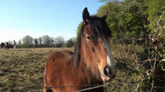 Horse at fence Stock Footage