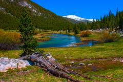lyell fork of tuolumne river along pacific crest trail, yosemite national par - stock photo