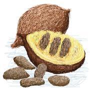 False durian nut Stock Illustration