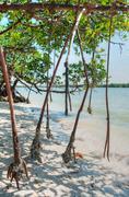 Mangroves in Everglades Stock Photos