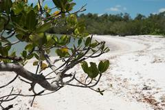 Mangroves in the Everglades Stock Photos