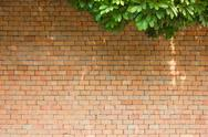 Brick wall with leaves Stock Photos