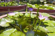 Lotus folwer in a basin Stock Photos