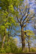 Deciduous forest in spring Stock Photos