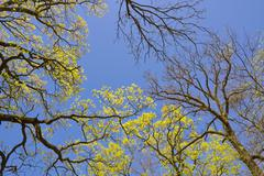 spring canopy - stock photo