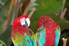 Parrot buddies Stock Photos