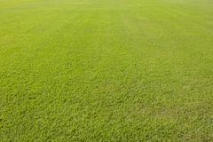 Green lawn background Stock Photos