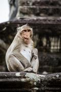 Monkey playing and having fun at Ankor Wat temple. - stock photo