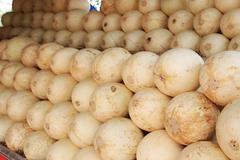 Ripe cantaloupe melons at the market Stock Photos