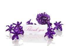 hyacinth flowers with gratitude - stock photo