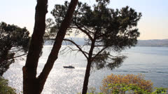 View of sea through the branches of tree Stock Footage