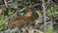 Stock Video Footage of 023 5236 rabbit