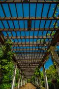 garden lattice walkway with stone pavers and vine flowers throughout the trel - stock photo