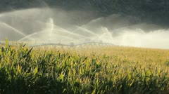 Okanagan Valley Corn Field Irrigation Stock Footage