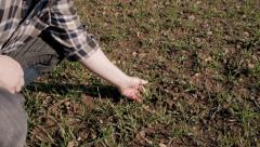 Farmer examines wheat shoots Stock Footage