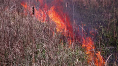 Fire in the steppes 9 Stock Footage