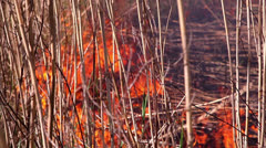 Fire in the forest 4 Stock Footage
