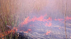 Fire in the steppes 3 Stock Footage