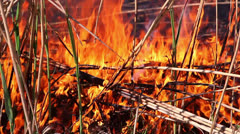Fire in the forest 1 Stock Footage