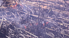 Ashes after a fire 3 Stock Footage
