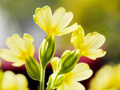 Yellow flowers nature Stock Photos