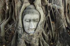 buddha head in tree roots - stock photo