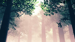 Deep Magic Forest 2 720 Stock Footage