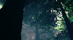 Deep Magic Forest 4 720 Stock Footage