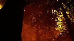 Deep Magic Forest 11 fireflies 720 Stock Footage