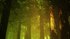 Deep Magic Forest 12 fireflies 720 Stock Footage