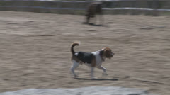 Dogs at Free Run Park Stock Footage