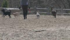 Dogs and trainer at Free Run dog park Stock Footage