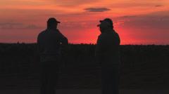 Grape harvest, Texas 5 - stock footage