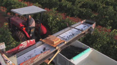 Stock Video Footage of Grape harvest, Texas 7