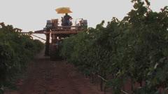 Grape harvest, Texas 6 Stock Footage