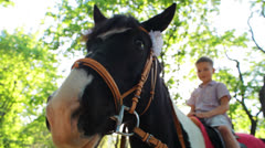 Horse close up, baby is sitting on top of him Stock Footage