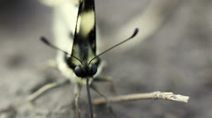 Scarce Swallowtail Butterfly Stock Footage